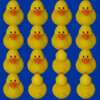 duck think outside the flock.jpg